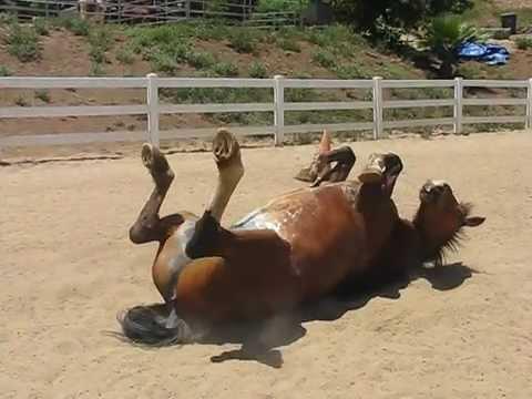 avete mai sentito come scoreggia un cavallo?