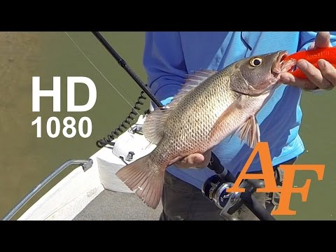 000170 Saltwater lure and fly fishing with Mick Andysfishing Fishing Video Big Fish