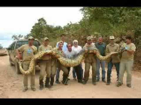 世界上最大的各種動物,完全不可思議!