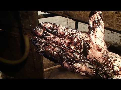 Кишечное кровотечение у нетеля. Клиника. Intestinal bleeding heifers. Clinic.
