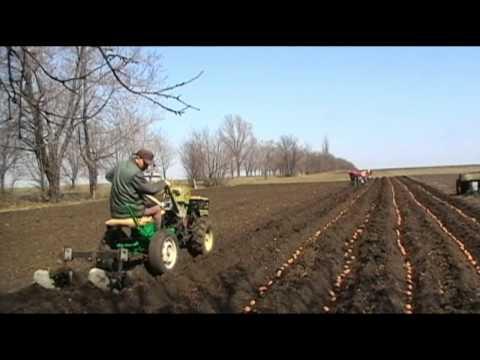 Посадка картофеля тяжелым мотоблоком фотография