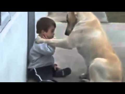 狗狗與唐氏症孩童的互動 網友看完熱淚贏框...(請自備面紙)