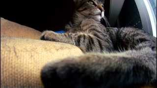 Ervilha Cat, Tumilho girlfriend.. Gopro time-lapse