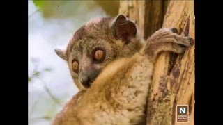 WEBINAR | Discover the Lost World of Madagascar - YouTube