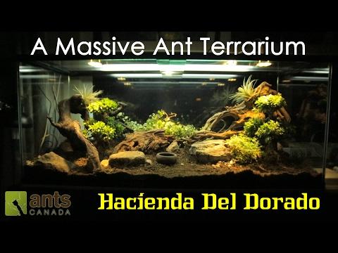 A MASSIVE ANT TERRARIUM Hacienda Del Dorado_Terrárium, Vivárium. Legeslegjobbak