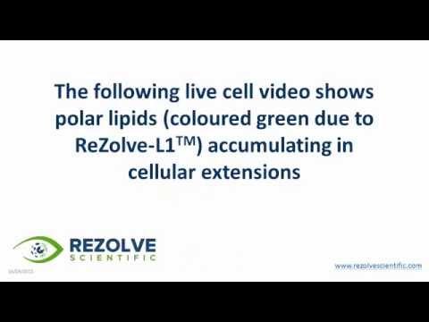 ReZolve-L1 for visualisation of polar lipids