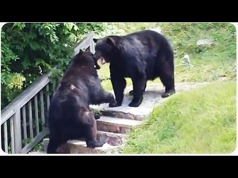 duel - Yogi Bear and his mortal enemy decided to get into paw fight over some food. They actually could just be playing in someone's front yard but it sounds cooler that they were in a fight. Original...