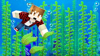 Building the PERFECT Kelp Farm in Minecraft (cheap build!)