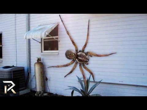 gli insetti più grandi al mondo! il terzo è incredibile!