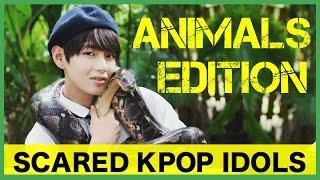 Video Scared K-Pop Idols: Animals Edition 1 MP3, 3GP, MP4, WEBM, AVI, FLV September 2018