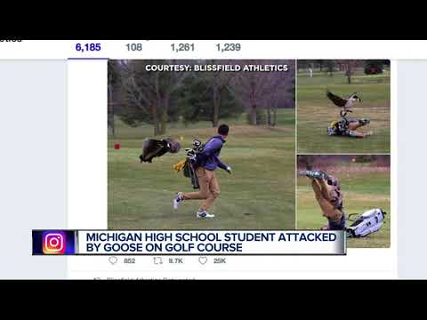 Photos of high school golfer being attacked by goose go viral