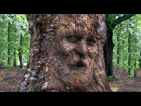 photoshop - Photoshop CS 6 Extended tutorial showing how to transform & camouflage someone's face onto the gnarly bark of a century-old, tree trunk. Tree trunk file: htt...