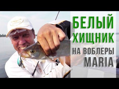 ловля жереха новосадов видео