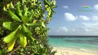 Maldives Islands Maldives  city images : Tropical Island - Maldives - 4K