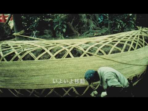A big bonsai is in danger シイガシの移植と危機  桶川市文化財第1号