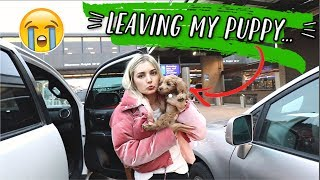 LEAVING MY NEW PUPPY FOR THE FIRST TIME... by Aspyn + Parker