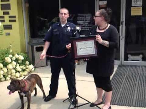 usa-poliziotto-chiamato-per-un-pitbull-pericoloso-finisce-per-adottarlo-223
