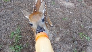 Video Rescued Little BABY Deer on our property download in MP3, 3GP, MP4, WEBM, AVI, FLV January 2017