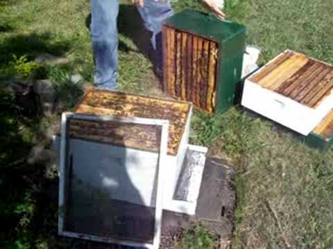 Treating A Honey Bee Hive For Mites With Powder Sugar
