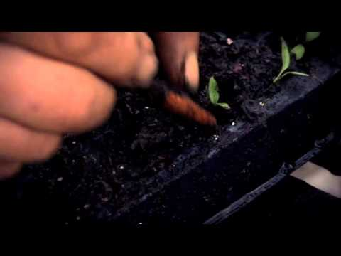 Propagating Seedlings in Spring
