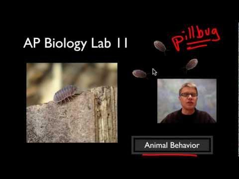 ap biology pill bugs lab essay