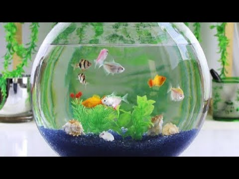 Fish Bowl Setting up For Guppy And Zebra Fish in Tamil | How To Make A Fish Bowl Set Up?