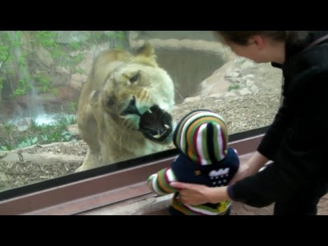 Nice to eat you said the lioness to the toddler