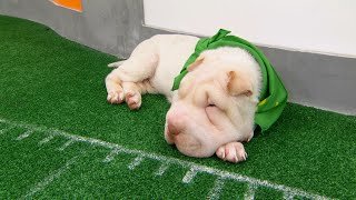 Game Day Revisited: Puppy Bowl XIV by Animal Planet