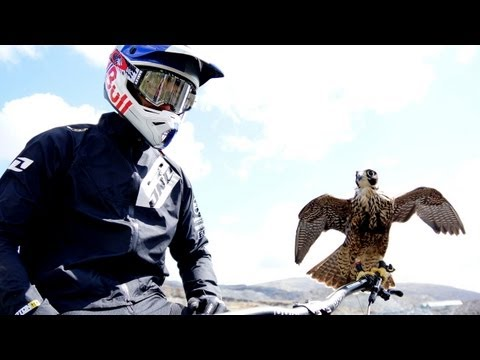 Peregrine falcon hunts downhill rider %28with Red Bull channel%29 - Earth Unplugged
