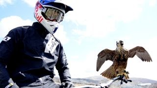 Download Youtube: Peregrine falcon hunts downhill rider (with Red Bull channel) | Earth Unplugged