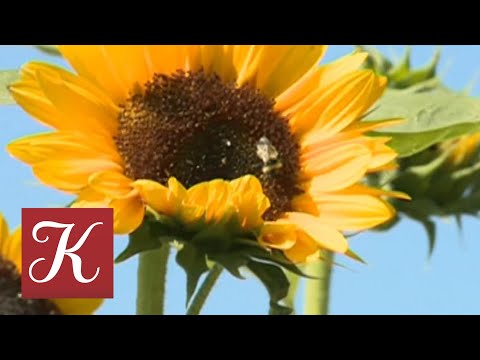 Новости культуры от 14.08.18 онлайн видео