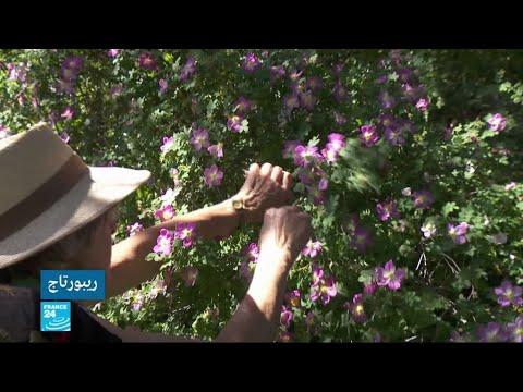 العرب اليوم - شاهد:امرأة تعتني بحديقة مهجورة في ليون الفرنسية
