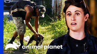 Terrified Puppy Rescued From Beneath A Truck | Pit Bulls & Parolees by Animal Planet
