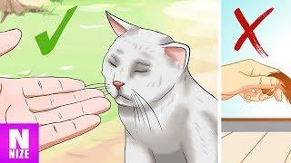 Video Wie Katzen Dir Ihre Zuneigung Zeigen! MP3, 3GP, MP4, WEBM, AVI, FLV Juli 2018