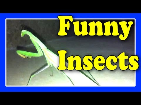 Funny Insects Videos For Children / Child React To Funny Animals