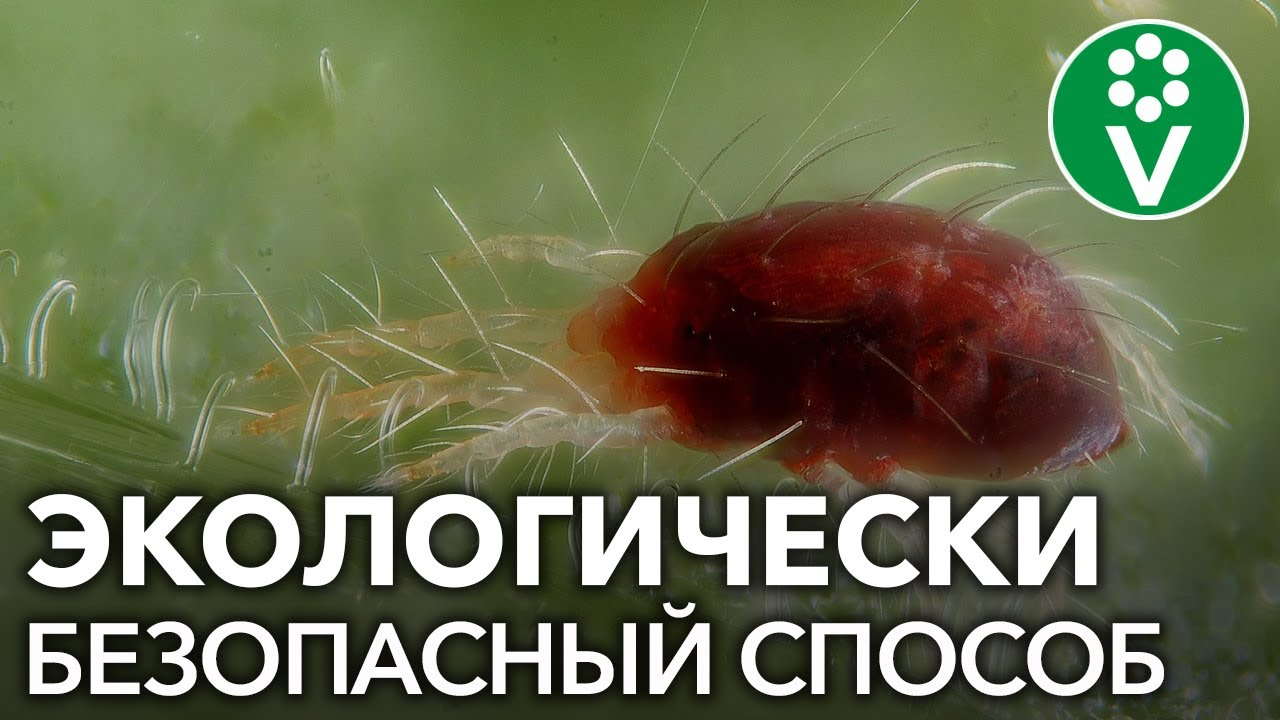 ПФКлерос, 0,5 л