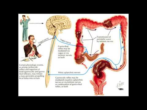 Constipation and the Colon - Mayo Clinic