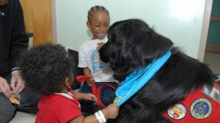 Maggie The Therapy Dog--West Tennessee Healthcare