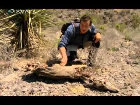 Bear Grylls - Texas