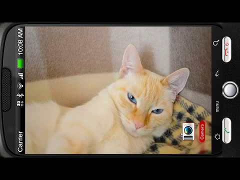 Video of Slumbering Cat in Basket Purrs