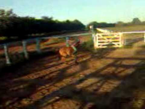 Montaria rm burro na cordinha montividiu do norte