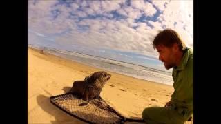 Venus Bay Australia  City pictures : Seal Rescue Venus Bay, Cape Liptrap Coastal Park, Victoria, Australia