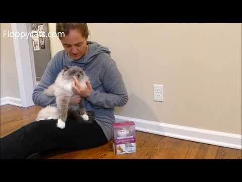 Does Feliway Work? Comfort Zone Feliway Cat Plug-in Diffuser Review - Floppycats