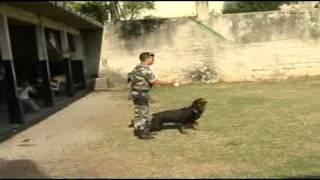 Cães que ajudam a polícia a encontrar drogas e armas