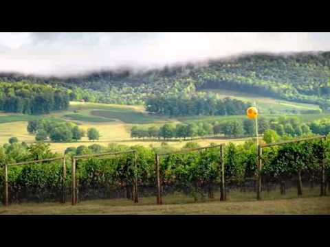 Kluge Winery and Vineyard