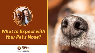 What to Expect at Your Pet's Nose?