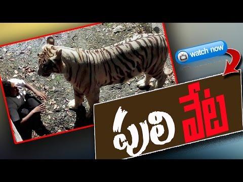What Happend in Delhi Zoo ?  | White Tiger Kills Young Man at Delhi Zoo : TV5 News