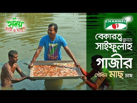 সৌখিন মাছে ঘুচবে বেকারত্ব  | Shykh Seraj | Channel i