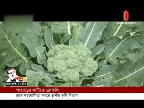 Agriculture dept promotes broccoli farming in hilli areas (20-01-2020) Courtesy: Independent TV