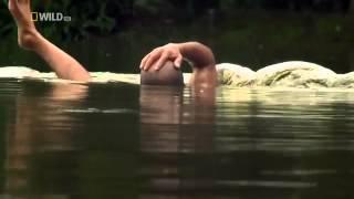 To jest niemożliwe! Mężczyzna, który zaprzyjaźnił się z krokodylem!